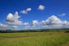 Cloudy sky and medow. Cloudy sky and green meadow Royalty Free Stock Photos