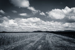 Cloudy sky over field of grain and corn. Summer time royalty free stock photos
