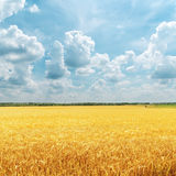 Cloudy sky over golden field Stock Images