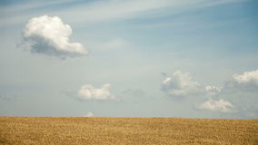 Cloudy sky over golden field stock video footage
