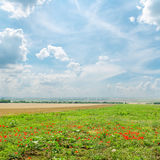 Cloudy sky over green field. With poppies Royalty Free Stock Images
