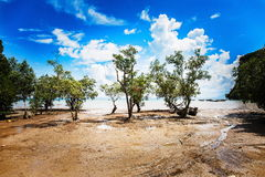 Cloudy sky over the green trees. Trees growing in the sand on the beautiful sea background Stock Photos