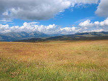 Cloudy sky. Over mountain Durmitor and wild flowers stock image