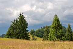 Cloudy sky over old trees growing on the mountain meadow stock image