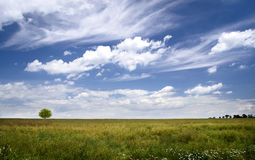 Cloudy sky over the spacious field. Landscape. Cloudy sky over the spacious field with tree. Landscape royalty free stock photos