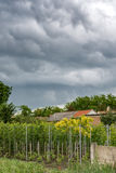 Cloudy sky over vineyard Stock Photo