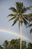 Cloudy sky and rainbow over a palm tree Royalty Free Stock Photography
