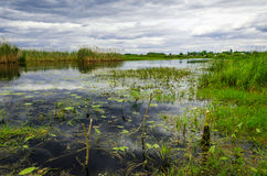 The cloudy sky on the river. The cloudy sky over the river with a green grass Stock Images