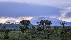 Cloudy sky on savannah, in Kruger National park, South Africa stock photos