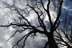 Cloudy sky seen through bare branches near Moritzburg, Saxony, G Royalty Free Stock Image