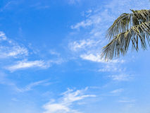Cloudy sky in a Sunny day of Early sring. Stock Images