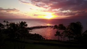 Tropical palm trees on the ocean shore at sunset on maui,hawaii stock video