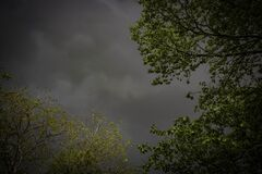 Cloudy Sky with Trees