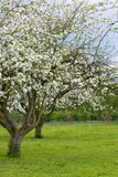Cloudy spring Royalty Free Stock Image