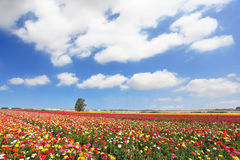 Cloudy spring day in Israel Royalty Free Stock Image