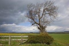 Free Cloudy Springtime Landscape Stock Photos - 24450013