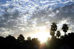 Cloudy sunrise. With palm trees and a bright blue sky Royalty Free Stock Images