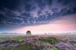Cloudy sunrise over heathland Royalty Free Stock Photography