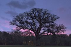A cloudy sunrise on Southampton Common royalty free stock photo