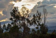 Cloudy sunset behind eucalyptus trees stock photos