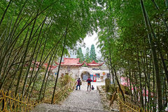 Cloudy Valley Temple bamboo forest Royalty Free Stock Photo