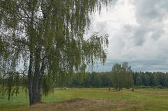 Cloudy view. August landscape on cloudy weather with birches on the right Stock Image