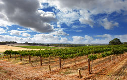 Cloudy Vineyard Stock Photos