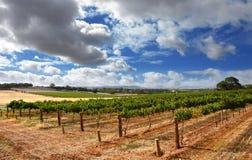 Cloudy Vineyard Stock Photos