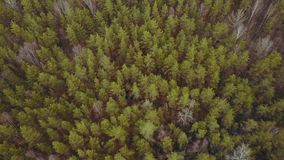 Cloudy weather autumn spring forest stock video footage