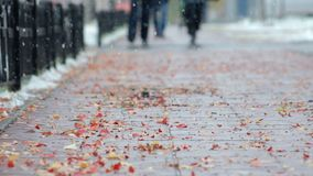 Cloudy weather with the first snow. Autumn fallen leaves lie on the pavement stock footage