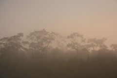 Cloudy weather foggy forest. Gorgeous sceneries of the fog forest in the cloudy weather with the orange morning sunrise at Ban Wat Chan Pine Forest in the royalty free stock photography