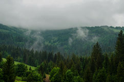 Cloudy weather in the mountains. Pine forest on the mountain top Stock Photos