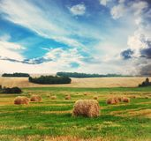 Cloudy wheat field Stock Photography