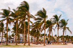 Palm trees in miami beach during windy summer afternoon with people playing Royalty Free Stock Photos