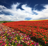 Cloudy and windy spring day Royalty Free Stock Images