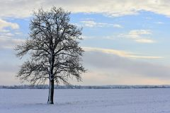 Cloudy winter day . Lithuania landscape . royalty free stock image