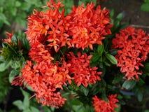 clouez pittoresque de lame de fleur beau de vert rouge de couleur image libre de droits