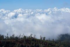 Clound pesado blanco con los árboles en el primero plano en el cráter de Ijen, Java Oriental, Indonesia Imagen de archivo libre de regalías