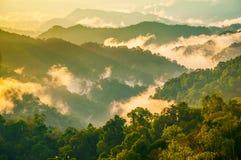 Clound und mountian im immergrünen Wald lizenzfreie stockfotos