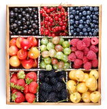 Clourful berries Royalty Free Stock Photo