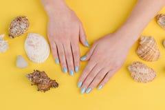 Clous et coquillages bleus photo stock