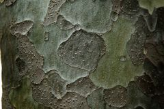 Clous -up decorative pattern on the bark of pine in shades of gr Stock Photography