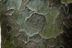 Clous - upp dekorativ modell på skället av sörja i skuggor av gr Arkivbild