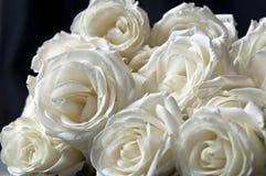 clouse呈杂色的桃红色玫瑰上升白色 库存图片