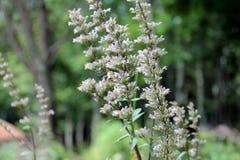 Clouse herauf Foto der Blume und der Biene lizenzfreie stockfotografie