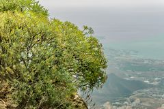 Clouse para arriba tiró de milkweed endémico Foco selectivo Vista aérea borrosa de la costa costa del oeste en el fondo Cielo y n foto de archivo libre de regalías