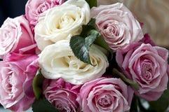 Clouse-up delle rose bianche e del colore rosa chiazzati Fotografie Stock Libere da Diritti