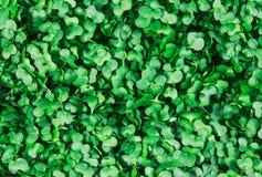 Clouse upp av ny grön Cress Salad bakgrund, textur Arkivbild