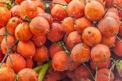 clouseup betel - καρύδι στοκ εικόνες με δικαίωμα ελεύθερης χρήσης