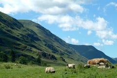 clovaglen scotland Arkivbild